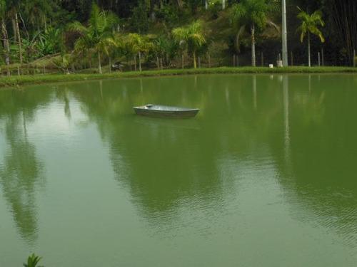 oportunidade! sitio em ibiúna com 26000m2 lago com peixes !