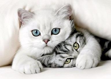 optimo felino gato 20kg nupec original