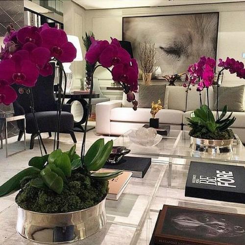orquidea phalaenopsis kit com 10 flores mais adubo grátis