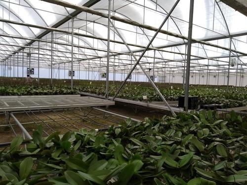 orquídeas, anturios y plantas ornamentales