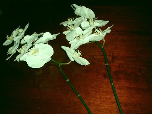 orquídeas blancas artificiales