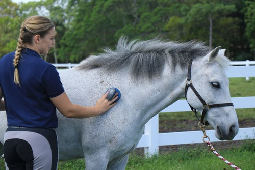 oster equine care series - kit de aseo (7 piezas)