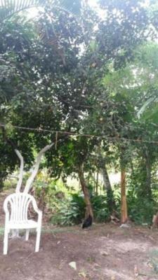 ótima casa no jardim coronel, em itanhaém - ref 3609