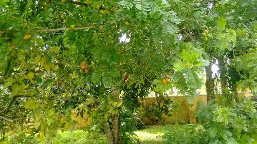 ótima chácara no jardim palmeiras