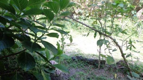 ótima chácara no jardim são fernando - ref 3812