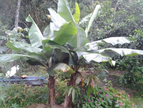 ótima chácara no jardim são fernando - ref 4054
