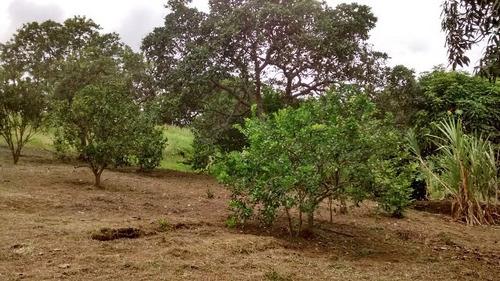 ótimo imóvel na fazenda são josé 6km do centro ref 4409