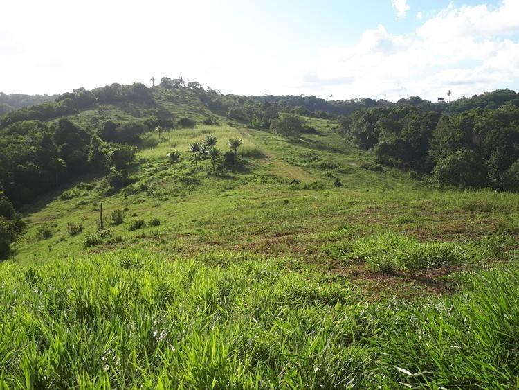 ótimo sítio 12 hectares - si0004