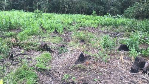 ótimo sítio no jardim mambu, em itanhaém - ref 4648