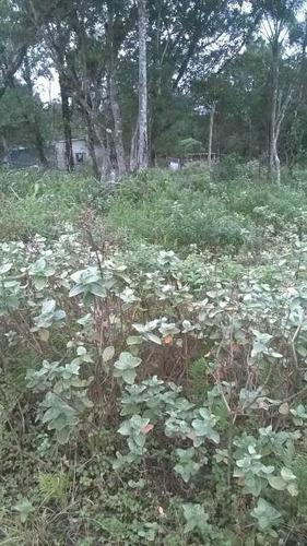 ótimo terreno no jardim coronel, em itanhaém - ref 4574