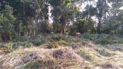 ótimo terreno no jardim marambá 2, em itanhaém - ref 4383