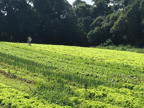 otimos terrenos 100% plano a partir de 33 mil em ibiuna j