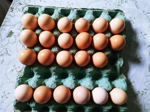 ovos de galinha brahma light