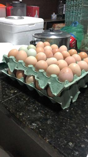 ovos galado embrapa 051 ótimo para produção de ovos
