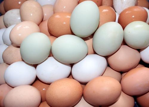 ovos índio gigante - reprodutor 119 cm & matrizes 101 cm