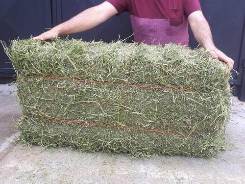 paca de heno jumbo de alfalfa para conejos 20kg muy verde