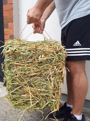 paca heno avena chica 8kg cuyo conejo chinchilla