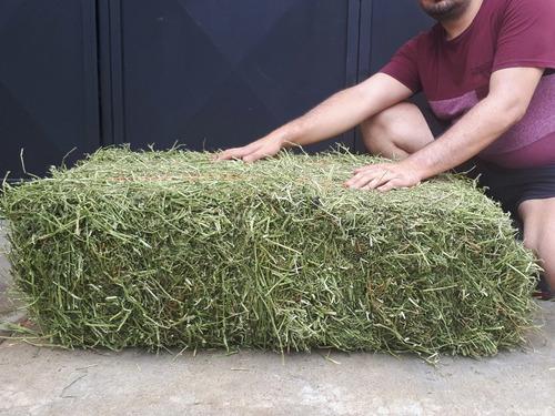 paca heno avena y alfalfa 22kg mixta mitad y mitad