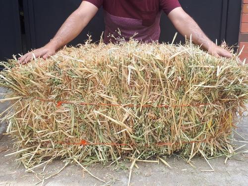 paca heno de avena 22 kg para cuyos