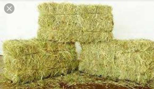 pacas de paja de arroz