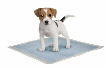 pack 200 unidades pañales adiestramiento perros 50x40 cms