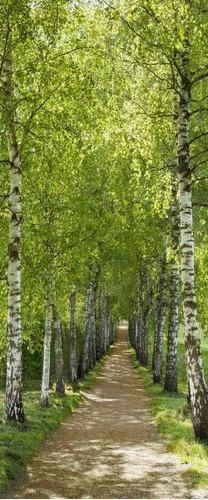 painel fotografico floresta birkenallee portas árvore folha