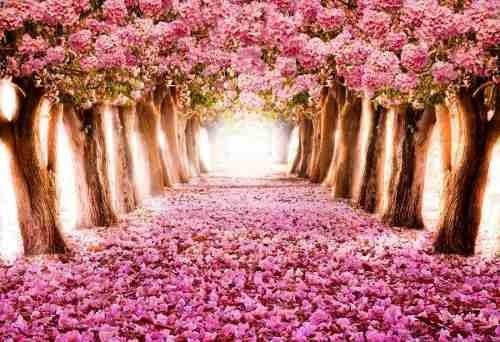 painel lona fosca 1,40 por 1,00  paisagem flores rosa ipê