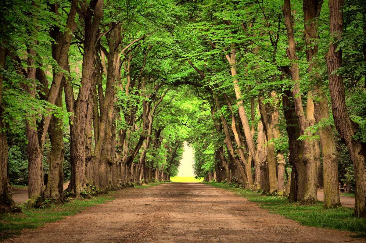 painel lona fosca paisagem floresta verde 06 3 00 x 2 00 r 189
