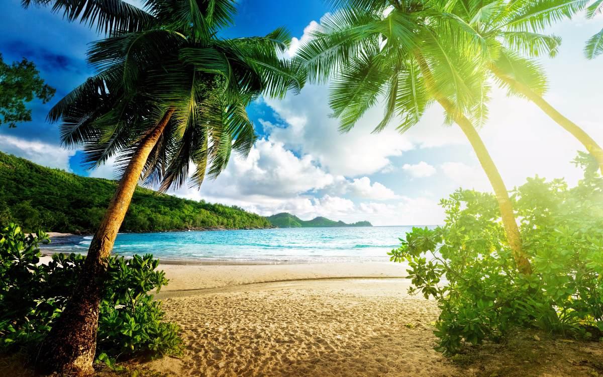 painel paisagem praia coqueiros 4 00 x 2 00 multi r 295 00 em