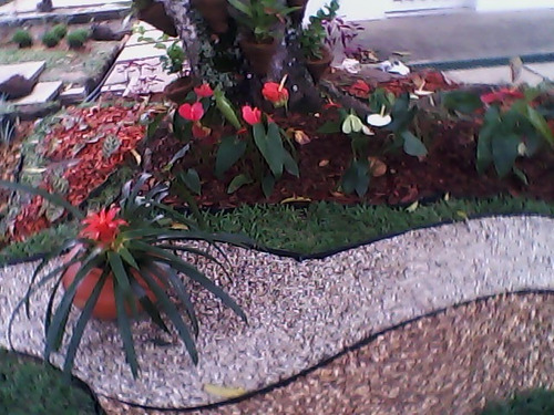 paisajismos,sistemas de riego,gramas,ornamentales