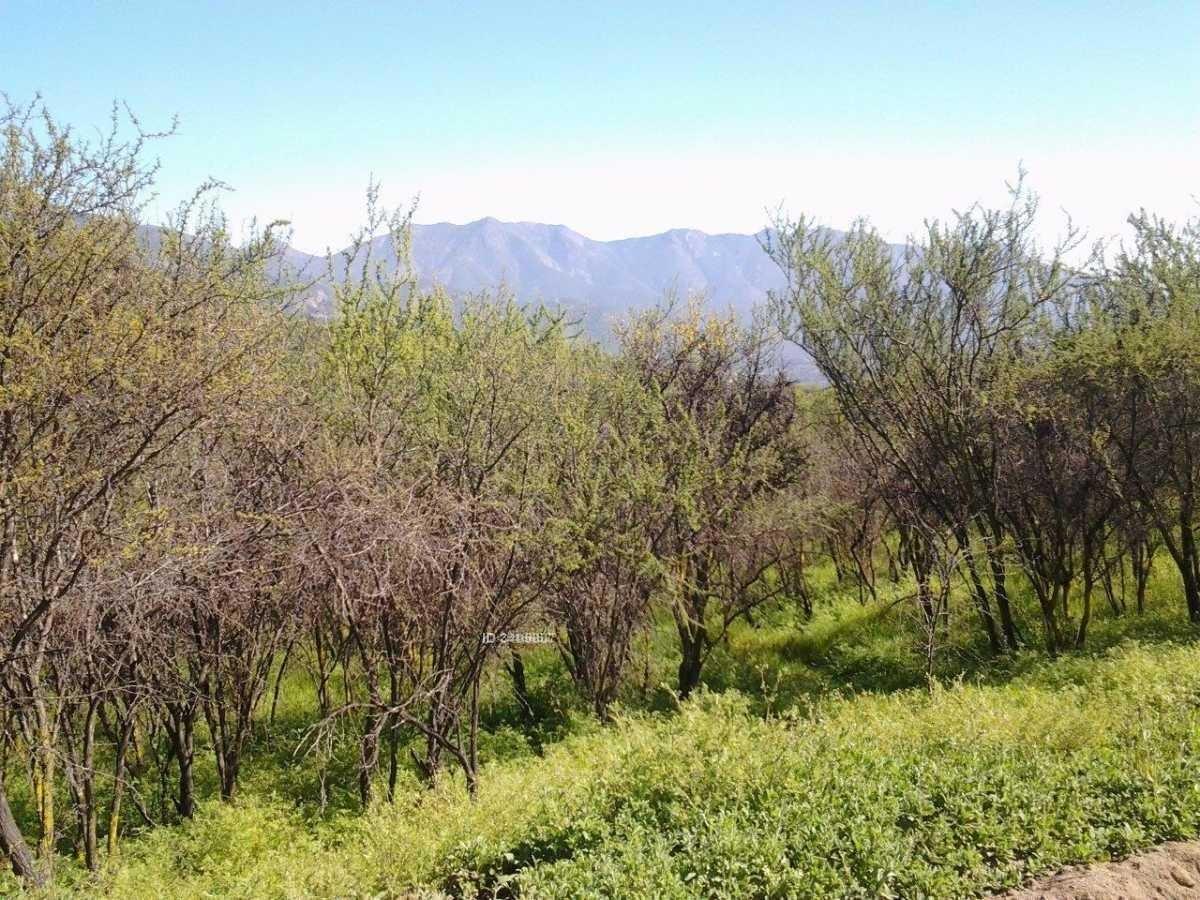 palmas de ocoa-comuna de hijuelas