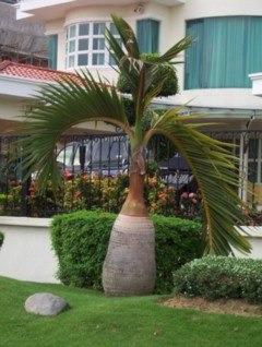 Palmas y semillas exoticas la mejor variedad en todo for Mesa plegable las palmas