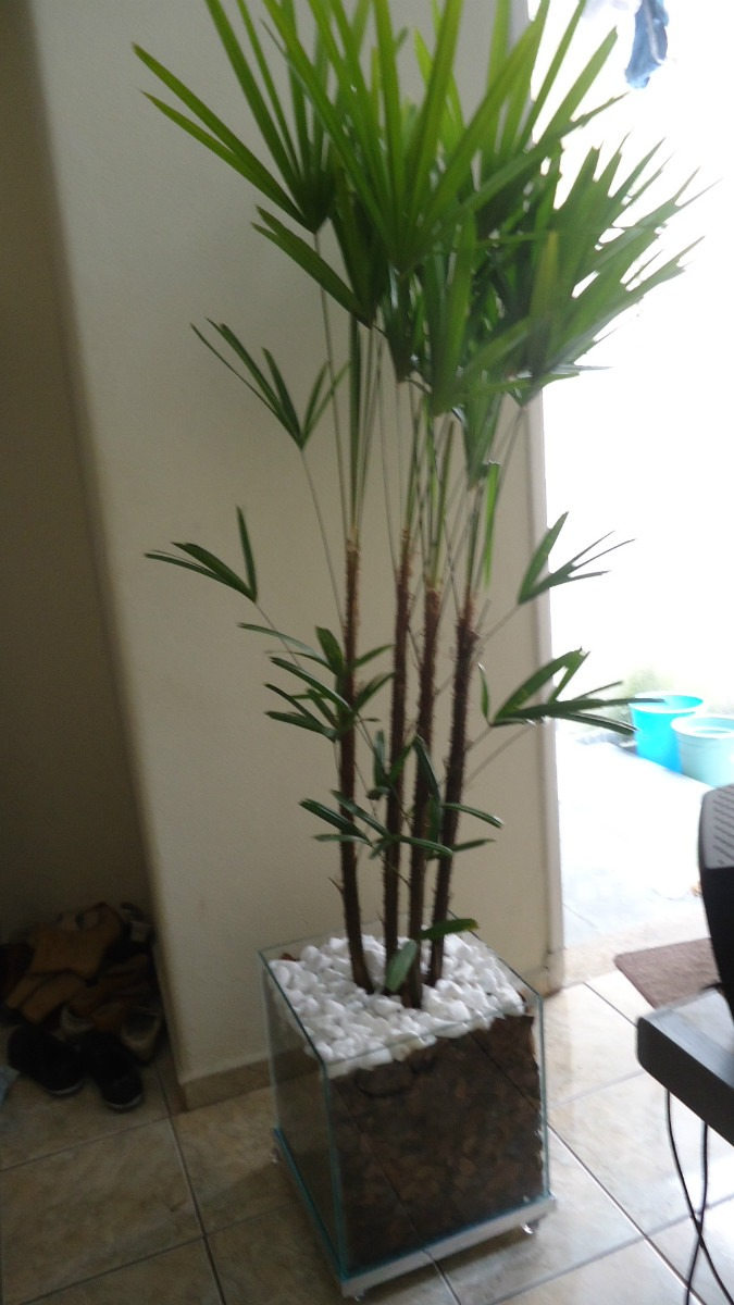 Comprar plantas de interior dise os arquitect nicos for Plantas de interior precios