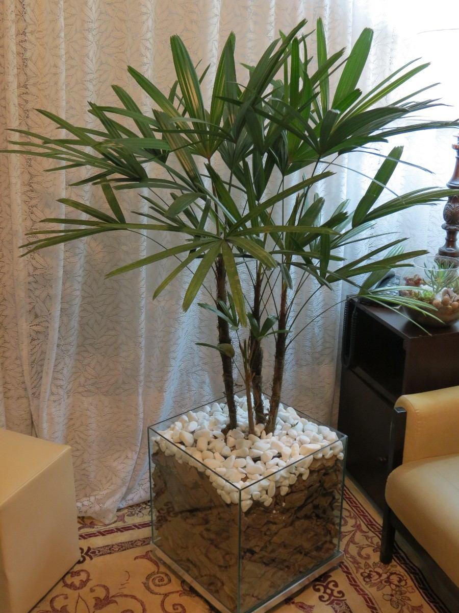 Palmeira r fia rafis no cachepot de vidro 40x40x40cm r - Plantas de interior para salon ...