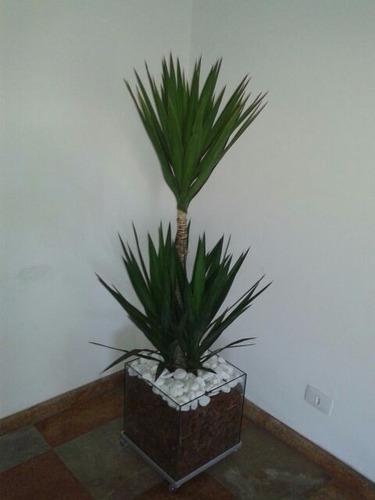 palmeira yucca no cachepot 30x30x30cm