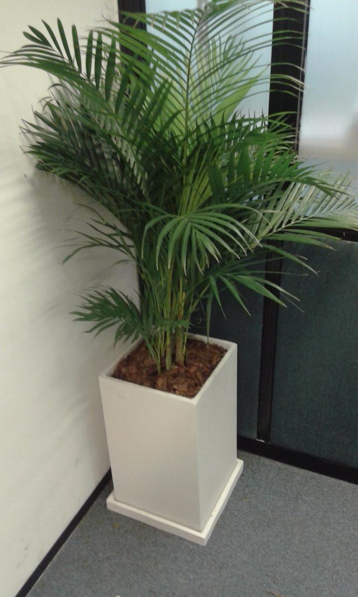 Palmera Areca En 15 Lts Plantas De Interior Para Oficinas - $ 1.550 ...