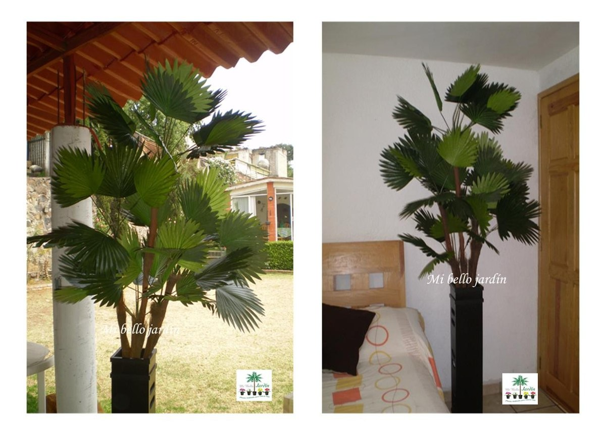 Palmeras hojas y plantas decorativas maa 3 en for Plantas decorativas hojas