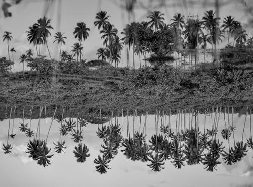 palmeras reflejadas