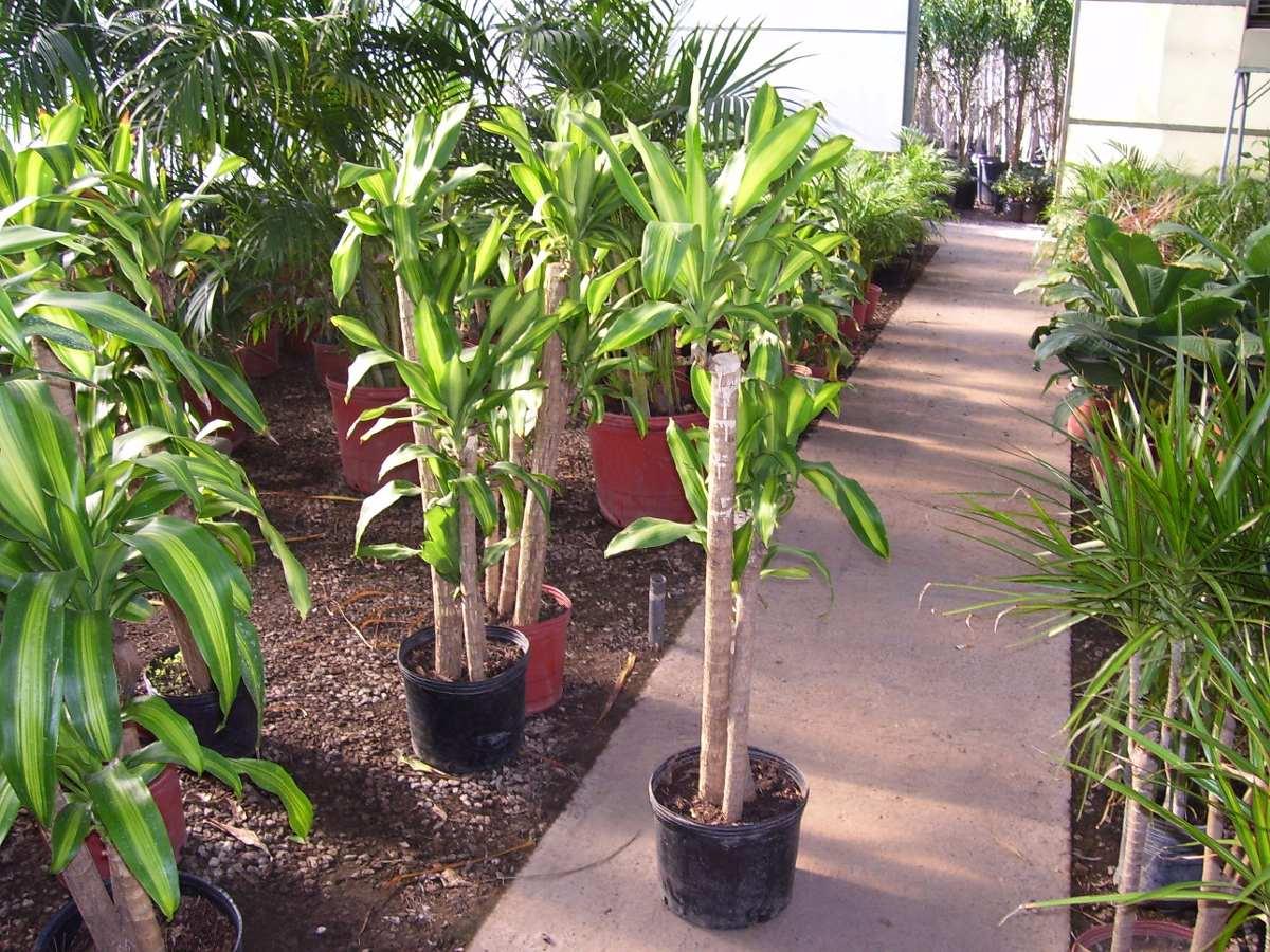 plantas de interior precios great plantas de ikea fotos y On plantas de interior precios