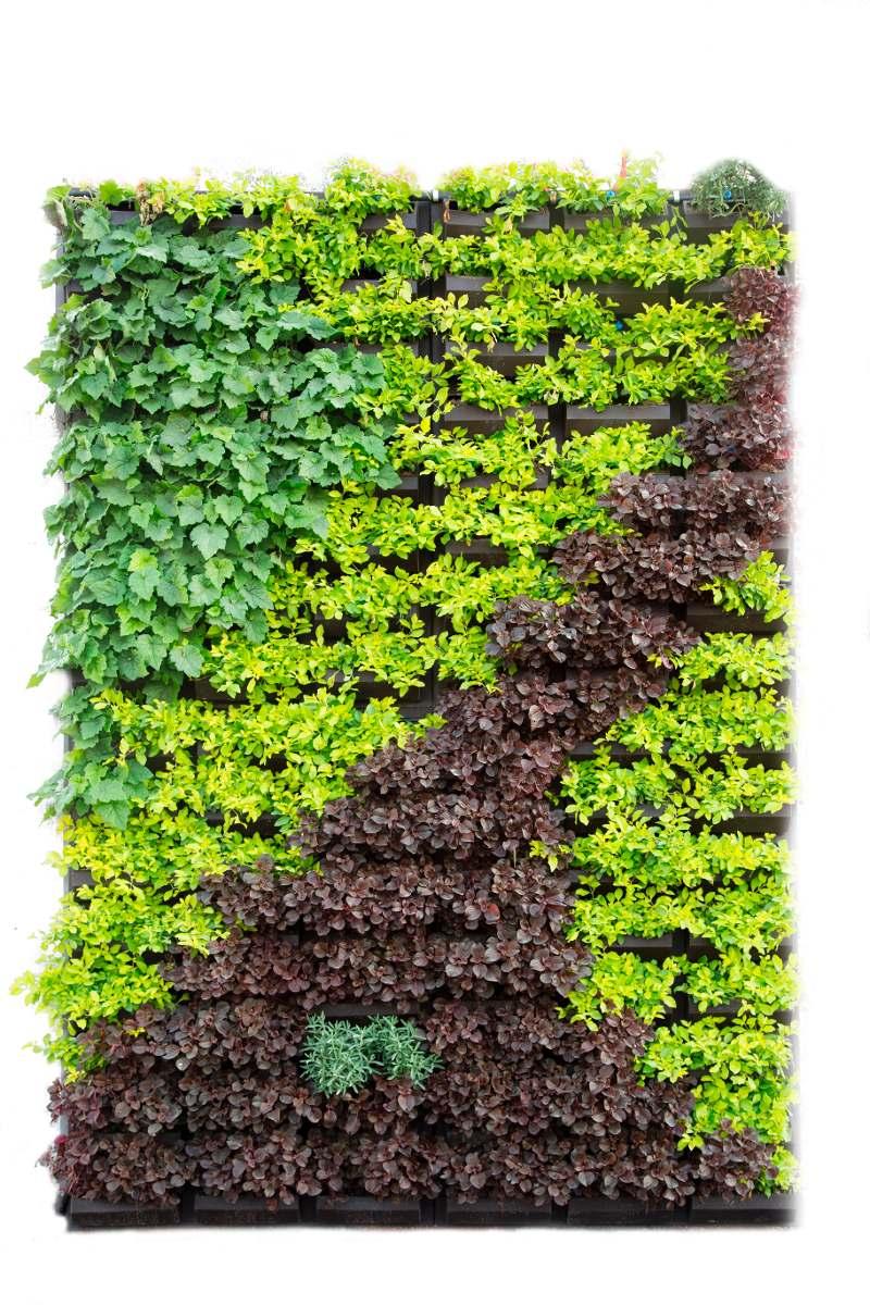 Panel muros verdes natural 1 en mercado libre for Tela para muro verde
