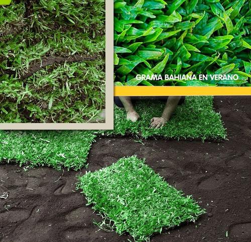 panes de grama por m2 envios y colocacion puerto jardin