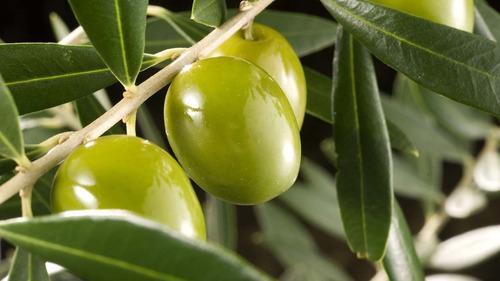 pannocchia aceite de oliva virgen extra x 5 lt
