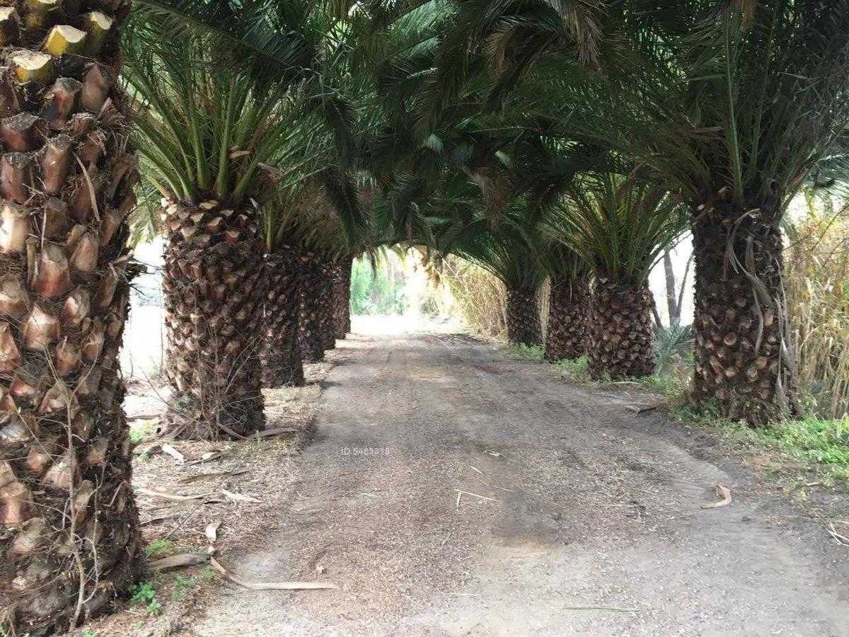 panquehue / ruta 60