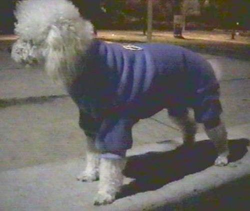 pants polar 4 patas invierno para perro talla 5 gran can