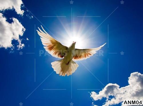Papel De Parede Igreja Espirito Santo Pomba Ceu 3m Anm04 R 135