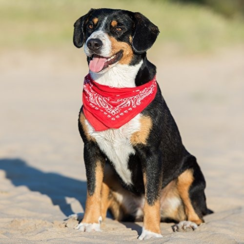 paquete de 3 pañuelos de mechaly para perros, pañuelo para
