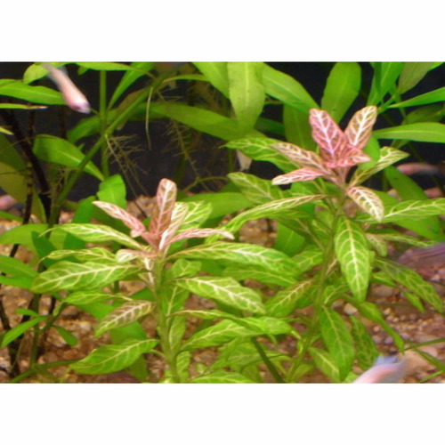 paquete plantas naturales acuario para principiantes