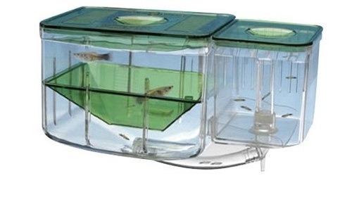 para acuarios peces