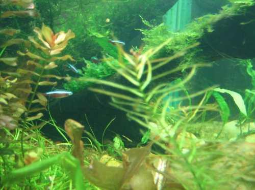 plantas aquaticas para aquarios r 500 em mercado livre