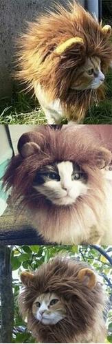 para gatos mascotas